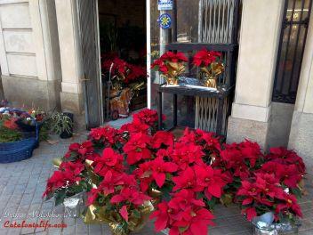 Рождество,Испания,Каталония,обычаи,традиции,празднование,рожественский цветок,украшенная,гирлянды,Новый Год
